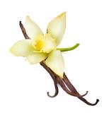 Vanilla - 38279218