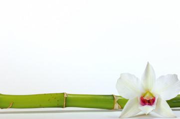 Orchidee Bambus auf weißem Hintergrund