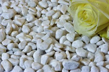 Rose mit Steinen