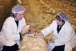 Vet and Farmer on Chicken Farm