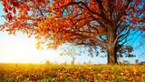 Fototapety Oak