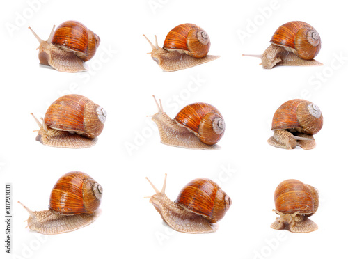 Collection of the garden snails in different position.