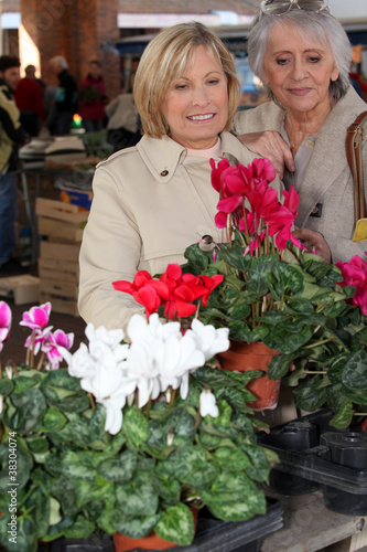 mature ladies in open air market choosing plants