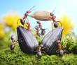 team of ants harvesting sunflower crop, agriculture teamwork