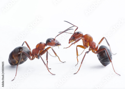 ants playing