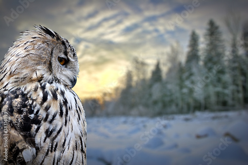 Deurstickers Uil owl on winter forest background