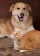 chien et chat roux ensemble