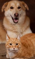 portrait d'un chat roux et d'un chien