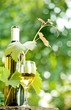 White wine bottle, young vine and glass