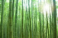 vert forêt de bambous avec la lumière du soleil