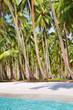Tropical beach with palm grove