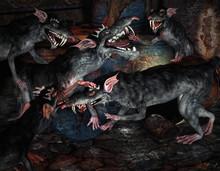 Szczury walki potwora
