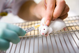 Vaccine test on laboratory mouse, injection