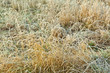 frozen grass at the meadow