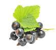 Blackcurrants with Green Leaves Isolated on White Background