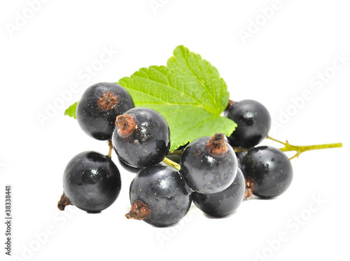 Blackcurrants with Green Leaf Isolated on White Background