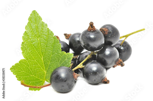Black Currants with Green Leaf Isolated on White Background