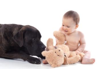 bébé de 10 mois à coté d'un Cane Corso