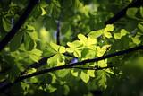 Fototapeta piękny - uroda - Drzewo