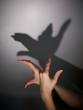 silhouette shadow of bird