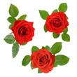 Set mit drei schönen roten Rosen mit Blättern