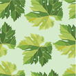 Background from vine leaves. Seamless pattern. Vector.