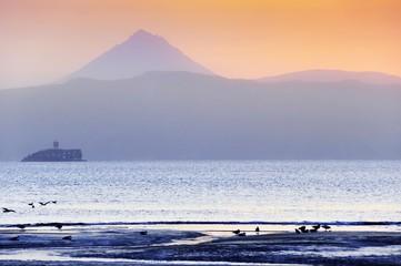 Birds on an ocean coast