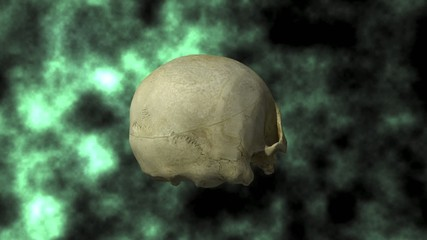 Human Skull Rotating With Matte