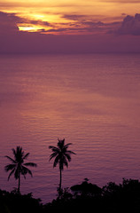 sunset and palmtrees at the ocean
