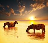 Fototapeta przygoda - afryka - Dziki Ssak