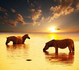 fototapeta zebry w wodzie