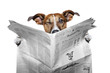 dog reading a newspaper  and  winking
