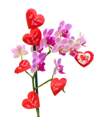 blooming orchids and Valentines on a white background