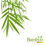 Fototapety Bamboo isolated greeting card vector illustration