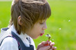 A cute child girl blowing a dandelion