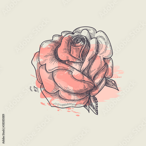 Artistic rose vector illustration - 38385089