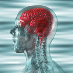 Gehirn im durchsichtigen menschlichen Schädel