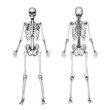 Skeleton Front & Back - Pencil Drawing Style - 3d render