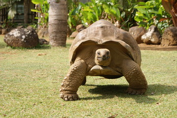 Giant tortoise just before you
