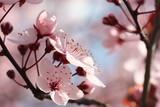 Fototapety Kirschblüten