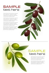 Two backgrounds with green and black olives.