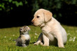 Fototapeten,katze,hund,katze,canino