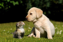 """Постер, картина, фотообои """"Hund und Katze"""""""