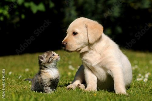 Foto op Aluminium Kat Hund und Katze