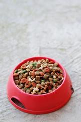 ciotola con cibo per cani