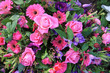 Mixed floral arrangement in pink and purple