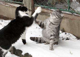 two fighting young cats