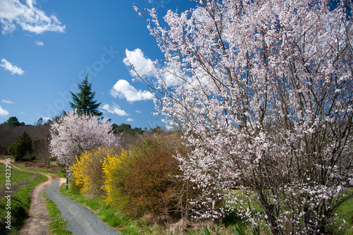 Spring country lane