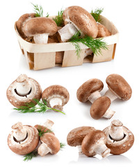 set fresh mushroom champignons with twig dill isolated on