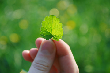 green leaf in the hand